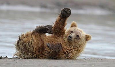 Brown Bear Wall Art - Photograph - High Five by Alfred Forns