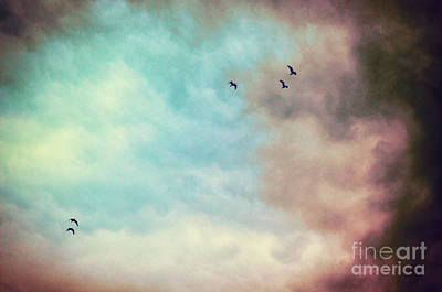 Photograph - High In The Sky by Silvia Ganora