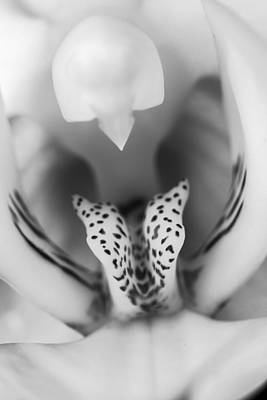 Blackandwhite Photograph - High Key Orchid by Adam Romanowicz