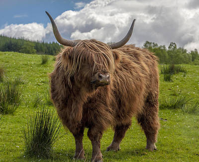 Photograph - High Know Brown Cow by Terry Cosgrave