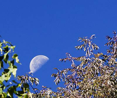 Photograph - High Moon by Chris Babcock