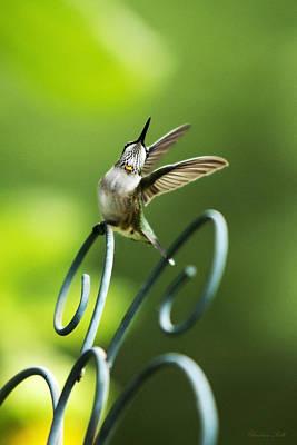 Photograph - High Spirit Hummingbird by Christina Rollo