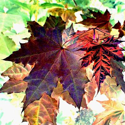 Maple Leaf Art Digital Art - High Street Decor 16 by Will Borden