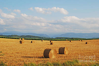 Photograph - High Summer Harvest by Ankya Klay