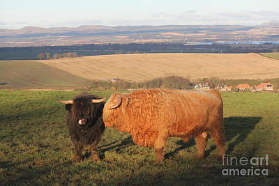Photograph - Highland Bull And Cow by David Grant