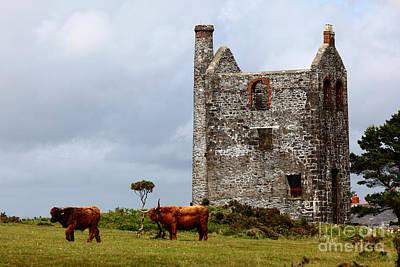 Highland Cattle And Ruined Tin Mine  Art Print