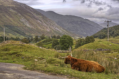Photograph - Highland Cow In Scotland by Jason Politte