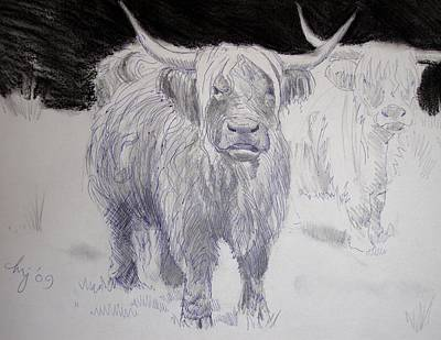 Drawing - Highland Cows by Mike Jory