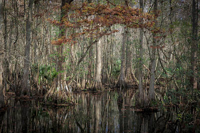 Cypress Swamp Photograph - Highland Hammocks State Park Florida    by Rich Franco