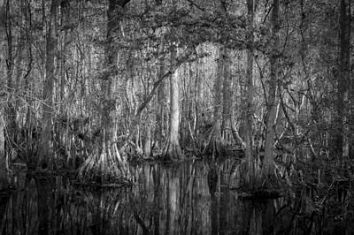 Cypress Swamp Photograph - Highland Hammocks State Park Florida Bw by Rich Franco