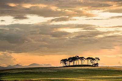 Photograph - Highland Trees by Veli Bariskan