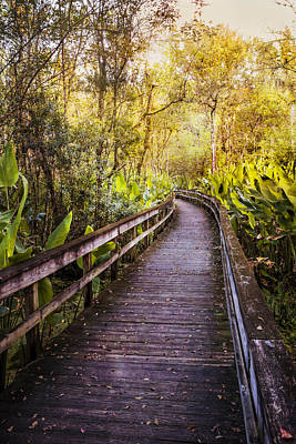 Highlands Hammock Walk Art Print by Debra and Dave Vanderlaan