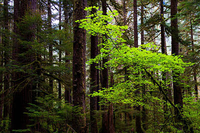 Olympic National Park Photograph - Highlight by Chad Dutson