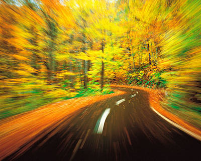 Peaceful Scene Photograph - Highway Amidst Forest by Panoramic Images