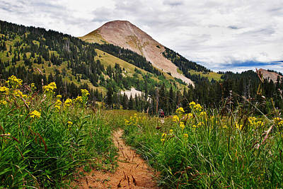 Wildflower Photograph - Hiking In La Sal by Adam Romanowicz