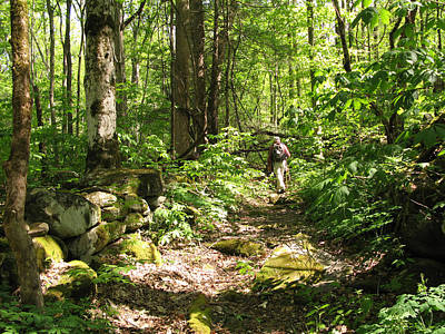 Photograph - Hiking Off Trail by Melinda Fawver