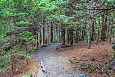 Photograph - Hiking Trail At Round Bald by Melinda Fawver