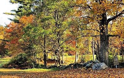 Photograph - Hiking Trail Hollis Nh by Janice Drew
