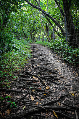 Forest Photograph - Hiking Trail In Maui Hawaii by Brandon Bourdages