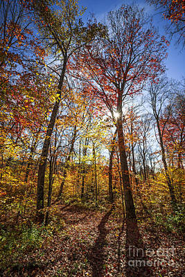 Photograph - Hiking Trail In Sunny Fall Forest by Elena Elisseeva