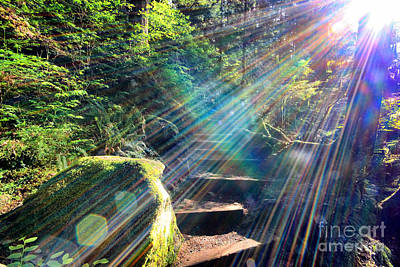Photograph - Hiking Trail Sun Flares by Charline Xia