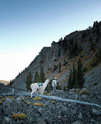 Llama Photograph - Hiking With A Llama In The La Tair by Ryan Heffernan
