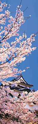 Cherry Blossoms Photograph - Hikone Castle W\cherry Blossoms Shiga by Panoramic Images