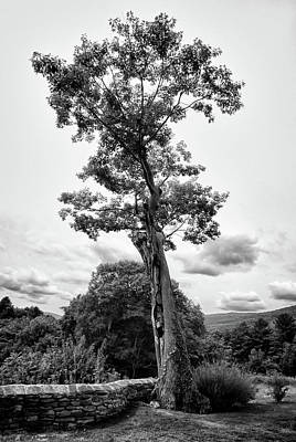 Photograph - Hildene Tree 5675 by Guy Whiteley