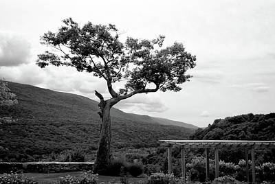 Photograph - Hildene Tree 5689 by Guy Whiteley