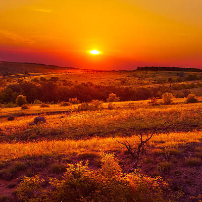 Photograph - Hills Of Gold by Dmytro Korol