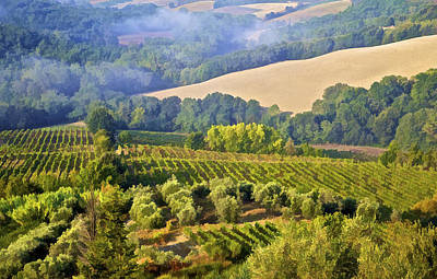 Grape Vines Photograph - Hills Of Tuscany by David Letts