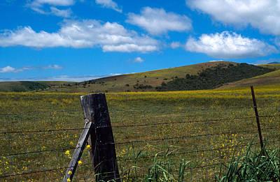 Yarrow Photograph - Hills Of Yellow by Kathy Yates