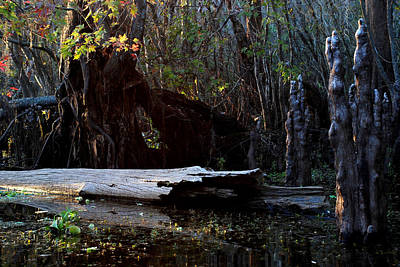 Photograph - Hillsborough Swamp Autumn 29 by Carol Kay