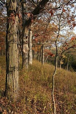 Photograph - Hillside Autumn by Dylan Punke