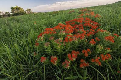 Photograph - Hillside Bouquet  by Scott Bean