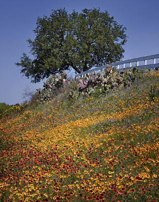 Photograph - Hillside Wildflowers by David and Carol Kelly