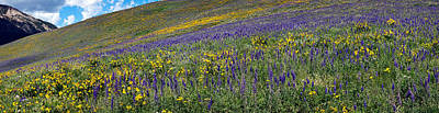 Delphinium Photograph - Hillside With Yellow Sunflowers by Panoramic Images