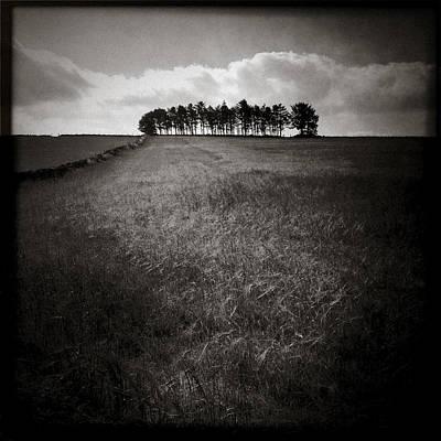Photograph - Hilltop Copse by Dave Bowman