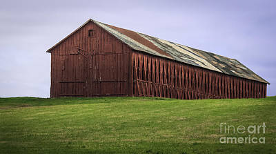 Photograph - Hilltop Connecticut Tobacco Barn by Phil Cardamone