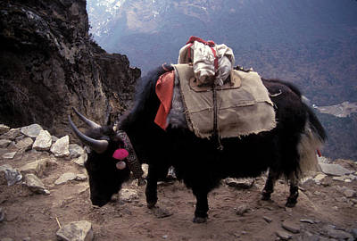 Yak Wall Art - Photograph - Himalaya Mountains by Scott Warren