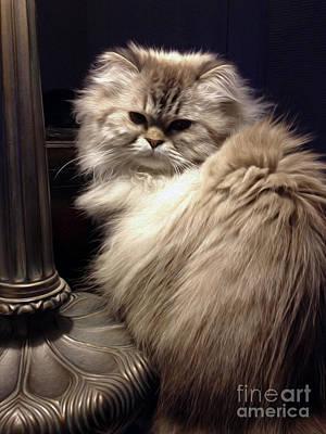 Kitty Mixed Media - Himalayan Cat by Jon Neidert