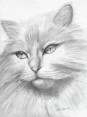 Drawing - Himalayan Cat by Lena Auxier