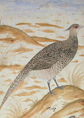 Gamebird Photograph - Himalayan Cheer Pheasant, Jahangir Period, Mughal, C.1620 Watercolour by Mansur