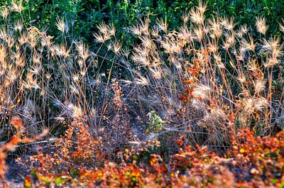 Jerry Sodorff Royalty-Free and Rights-Managed Images - Hint of Fall Colors 15813 by Jerry Sodorff