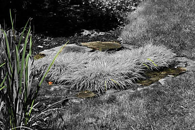 Photograph - Hint Of Green Grass by David Yocum
