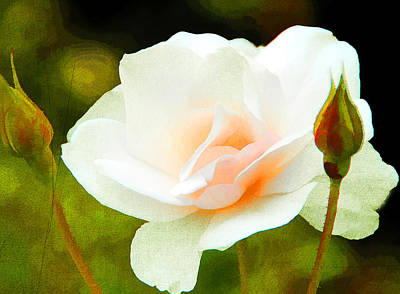 Photograph - Hint Of Pink by Diane Wood