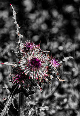 Photograph - Hint Of Purple by David Stine