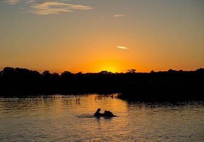 Photograph - Hippo Sunset by Havard Rosenlund
