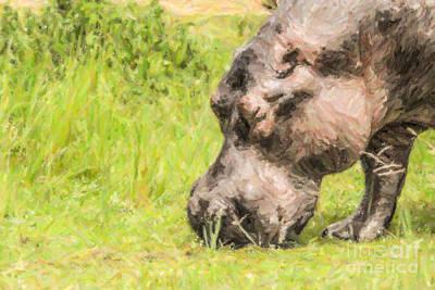 Hippopotamus Digital Art - Hippo Hippopotamus Amphibius Grazing by Liz Leyden
