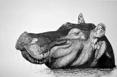 Hippopotamus Drawing - Hippo by Kathleen Fiorito
